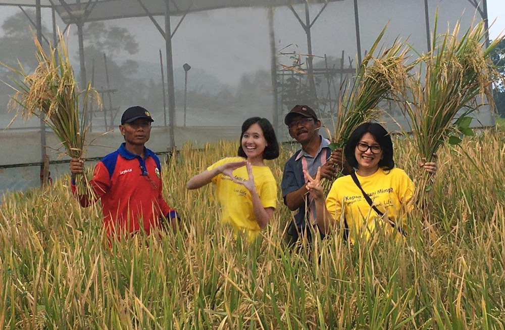 Photo-3-Panen-Sawah-Organik-oleh-Life-Lovers-&-pengurus-TLF